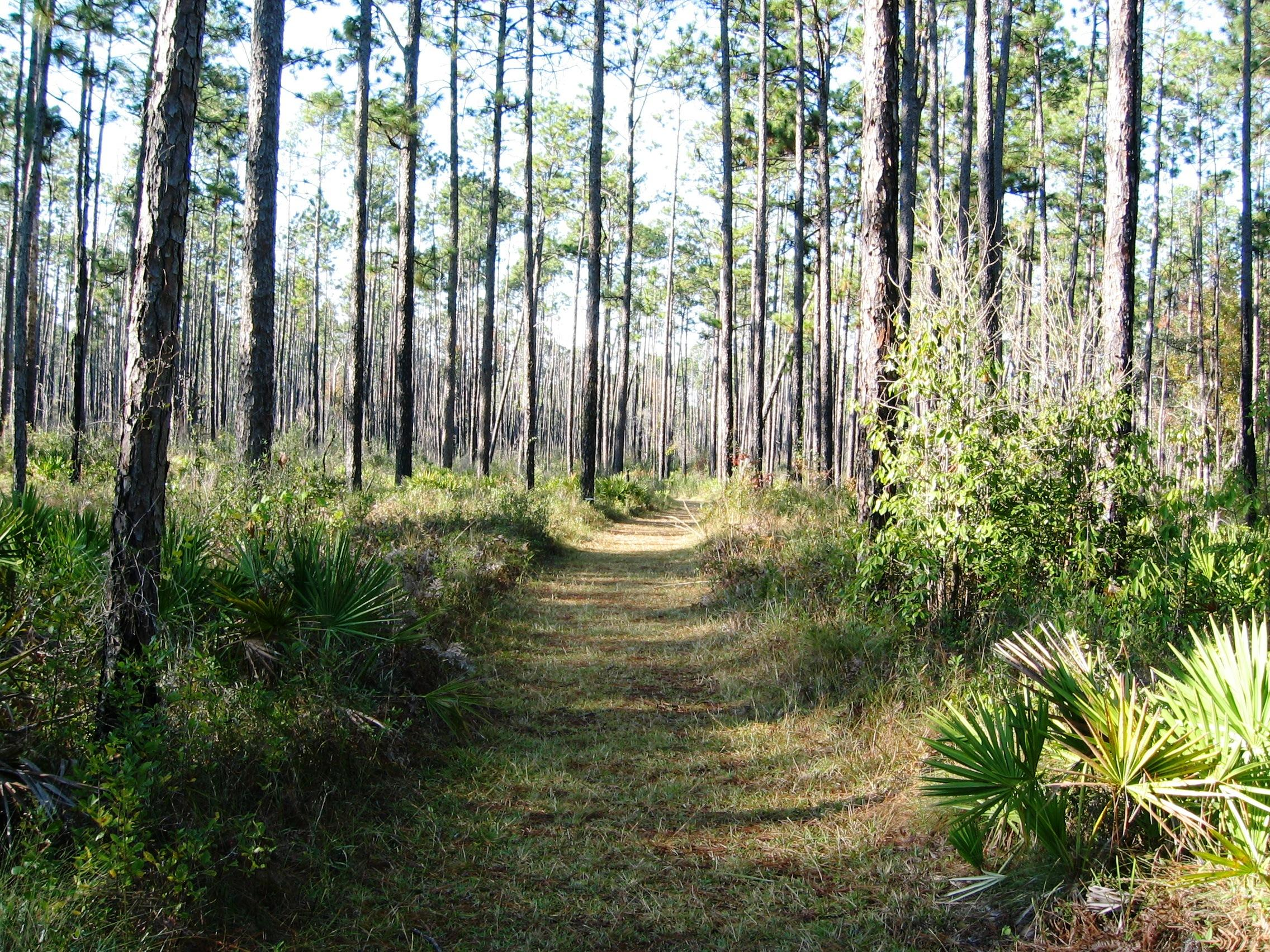 Blackwater River State Park, Florida - Camping Reservations