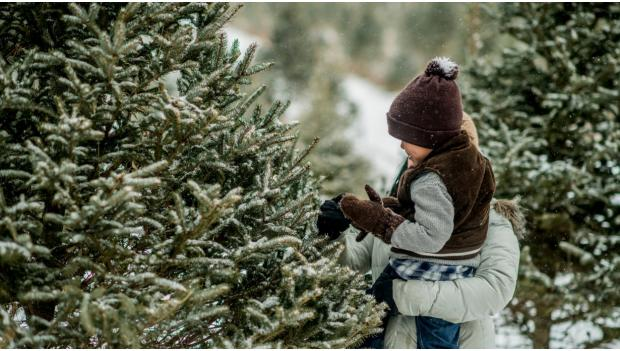 Cut Your Own Christmas Tree.Tips For Cutting Down Your Own Holiday Tree