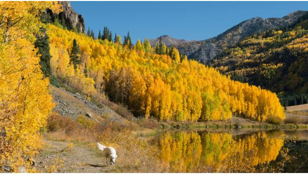 Camping and Hiking With Dogs Fall Season