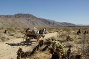 Photo: ANZA-BORREGO DESERT SP