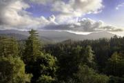 Photo: BIG BASIN REDWOODS SP
