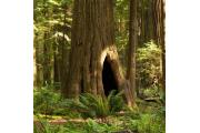 Photo: HUMBOLDT REDWOODS SP
