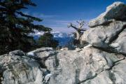 Photo: MT. SAN JACINTO SP