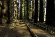 Photo: RICHARDSON GROVE SP