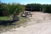 Packed sand campsite with scrub, palmetto plants, and sea oats lining the back of the site. Barricade posts to protect vegetation. Picnic table and ground grill located on the left and electric and water on the right.