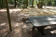 Campsite with picnic table and fire ring.