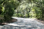 Two bicyclists enjoying a ride down the oak canopied, 3-mile park drive as it winds through the cool maritime forest.