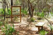 A place of solitude and solace on the parks 4.5 mile interpretive hiking and biking trail. Saw palmetto, sand live oaks, wiregrass, and sand pines surround this peaceful resting spot.