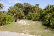 Picnic table and grill on the left surrounded by palms on grass.