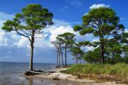 Photo of the bay side of the park; Photo shows slash pines and the shore line of the bay.
