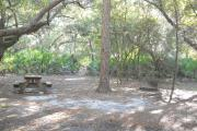 Picnic table on left by oak tree. Fire grill on right by skinny pine. Large pine in between table and grill.