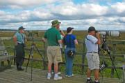 Birdwatchers, nature photographers, and park rangers scan the horizon for wildlife at the platform at the end of the La Chua trail.  Located at the north end of the park, this trail provides excellent wildlife and wildflower viewing opportunities.""