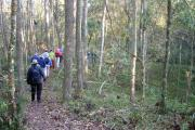 Hikers on the Rim Ramble trail enjoy a ranger-guided walk through a live oak hammock dotted with sinkholes on the north rim of the prairie basin.  This guided walk is offered November through April.""