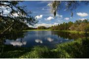 A stunning view of one of the many conifer bordered lakes at Alafia River State Park.