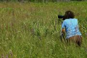 A visitor kneels in the prairie to capture the butterflies and wildflowers with her camera. Purple blazing star, white rattlesnake master, curly toothache grass, skinny wiregrass, dwarf oak and saw palmetto are plants visible in this photo.