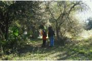 A family observes animals and plants while walking the Hammock Nature Trail. The trail meanders through a subtropical hardwood hammock, wetlands, and the edge of a prairie.