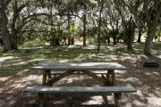 Oak branches spread out above the picnic table and fire ring.