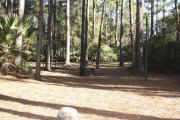 Photo: 16, Campground. View of site with picnic table and fire ring.