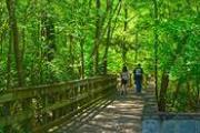 Photo: REED BINGHAM STATE PARK - Hiking & Nature Trails