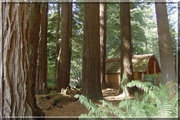 Photo: Crescent City / Redwoods KOA