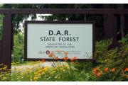 Photo: DAR State Forest