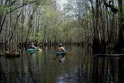 Photo: Merchants Millpond State Park