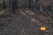 Photo: 010, Eno River Piper Creek Campground