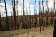 MEADOW RIDGE 2013 - Waldo Fire Damage