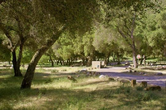 camping at arroyo seco  ca