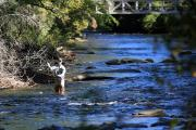 Photo: DAVIDSON RIVER TROUT FISHING