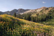 Photo: ALBION BASIN