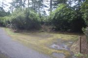 Photo: TYEE CAMPGROUND