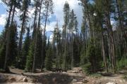 Photo: NORTH FORK CAMPGROUND - St. CHARLES CANYON
