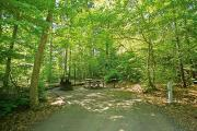 Photo: ARROWHEAD CAMPGROUND: Typical wooded campsite