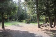Photo: PINE NEEDLE GROUP SITE