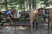 Photo: WILLOW PRAIRIE HORSECAMP
