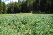 Photo: NOTCH CABIN Meadow