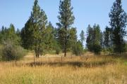 Photo: PATTEE CANYON PICNIC AREA